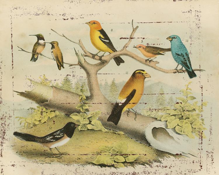 Gathered Birds.jpg