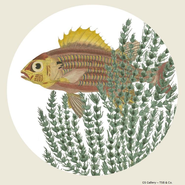 G305 Fish & Seaweed.jpg