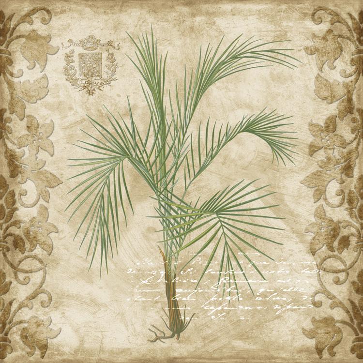 G301 Palm I.jpg