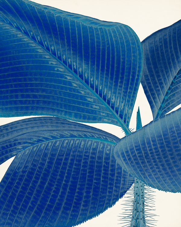 G12261-SA Palm in Blue II NOT FOR WALL DECOR..jpg