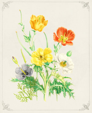 Poppies%2520II.jpg
