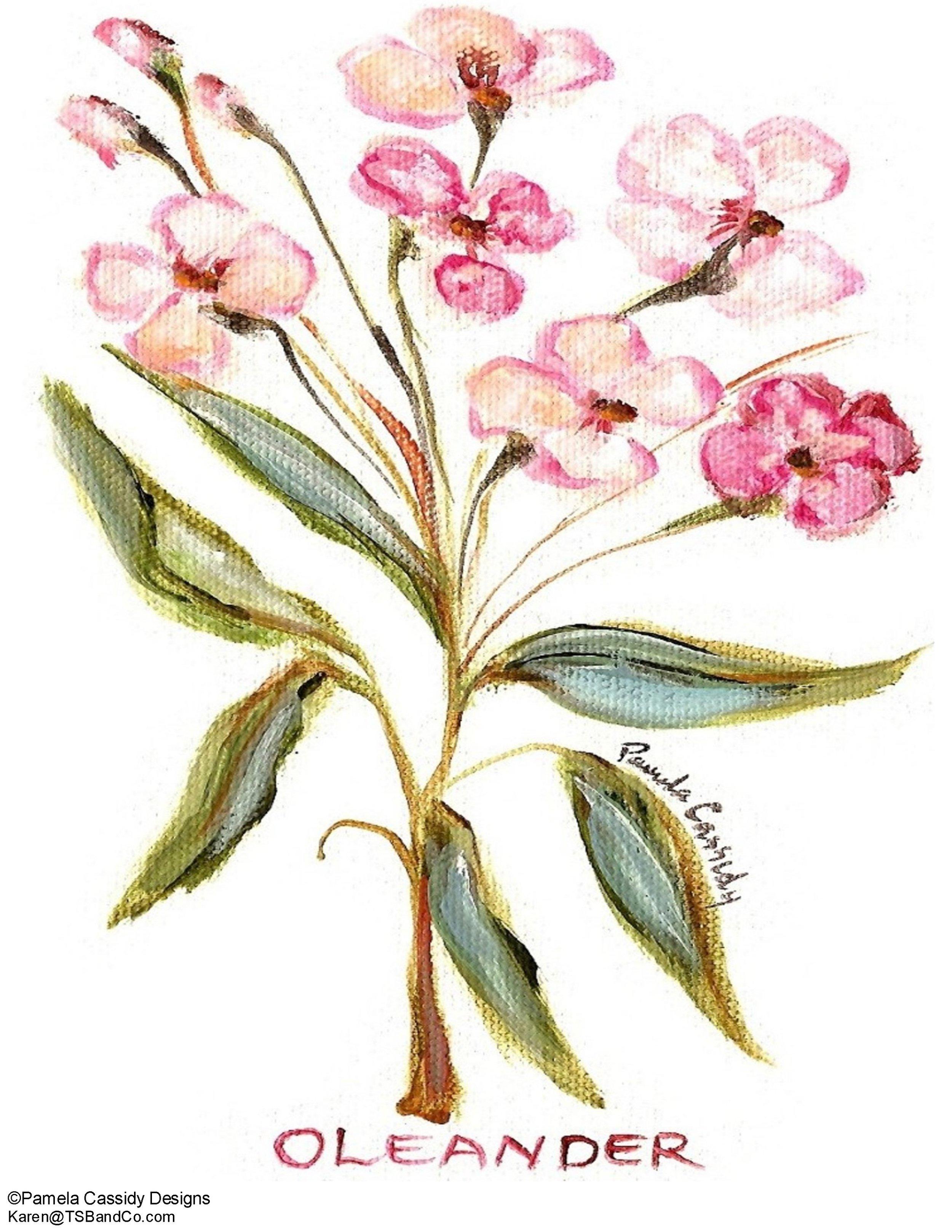 PCD TSB 60031 Oleander.jpg