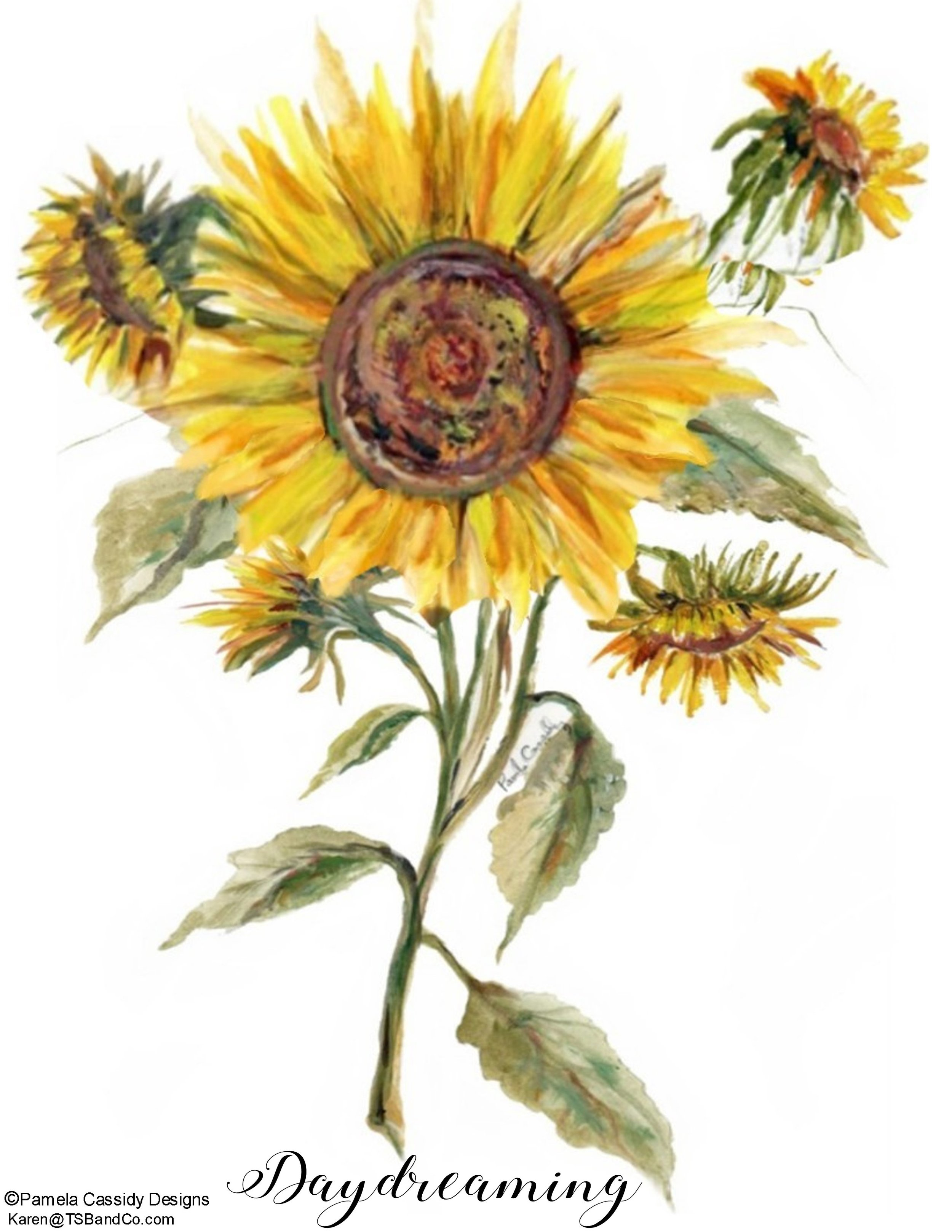 PCD TSB 5001 Sunflower.jpg
