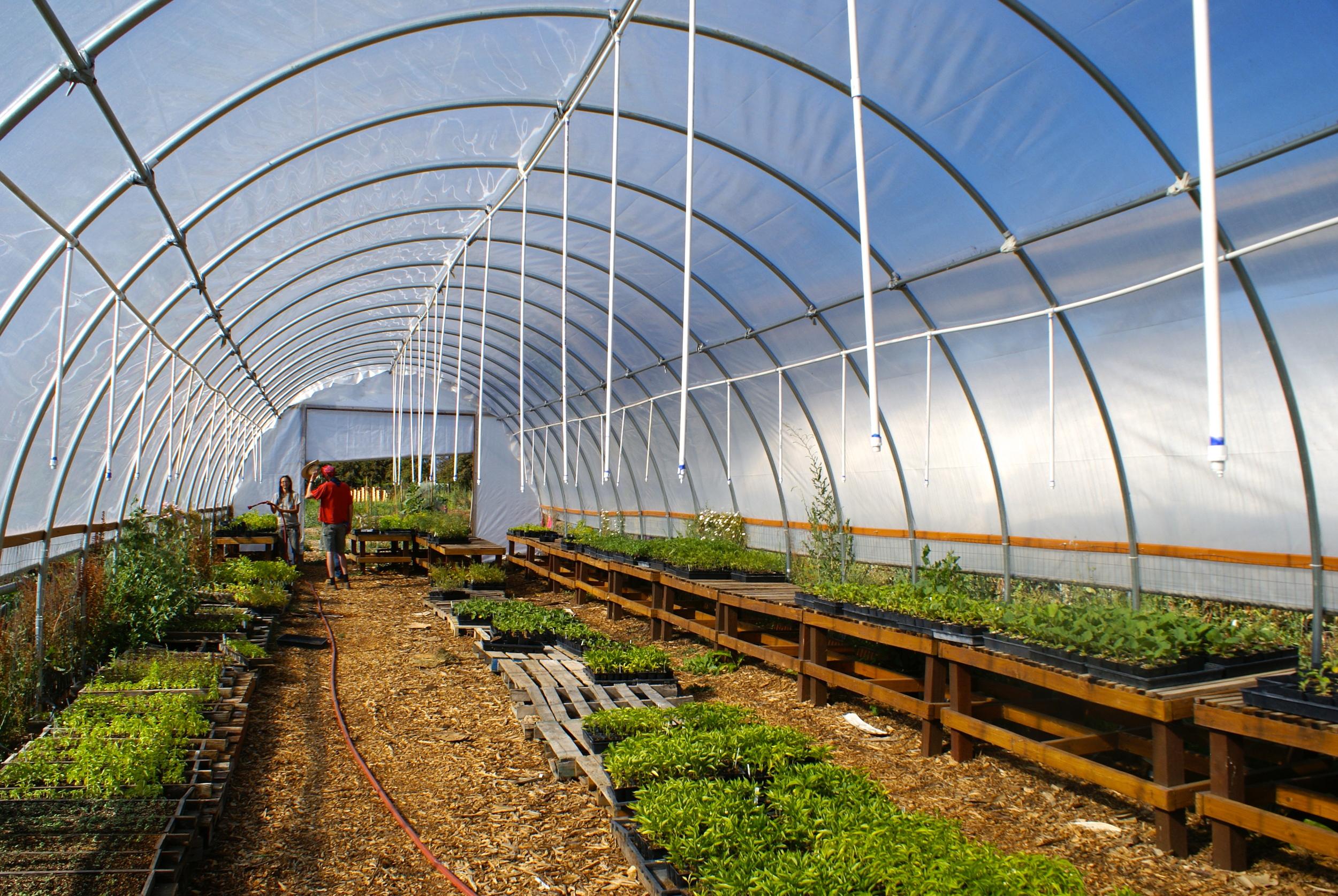 New Greenhouse Irrigation System — Veggielution