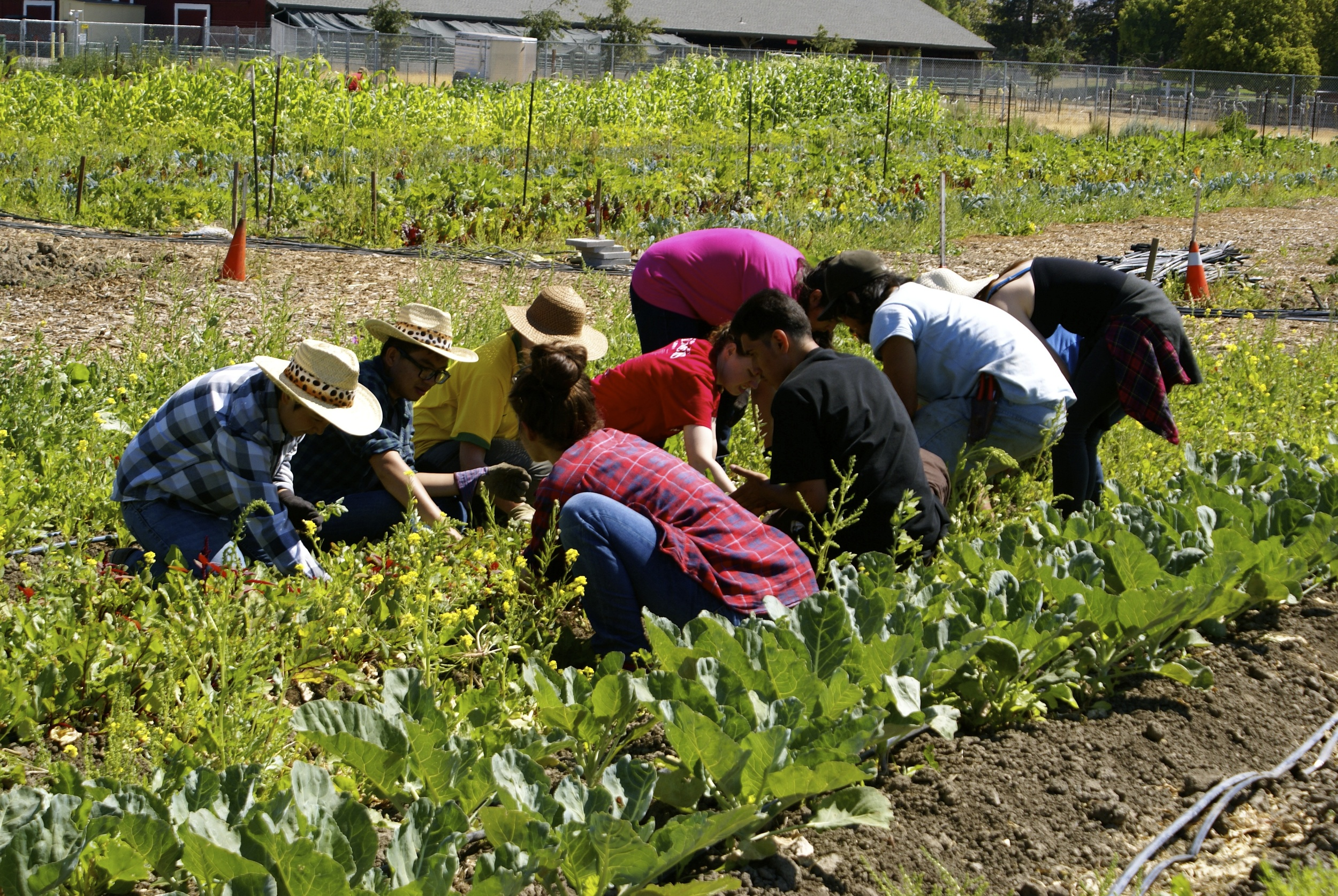 The interns work alongside volunteers to keep the beds free of weeds.