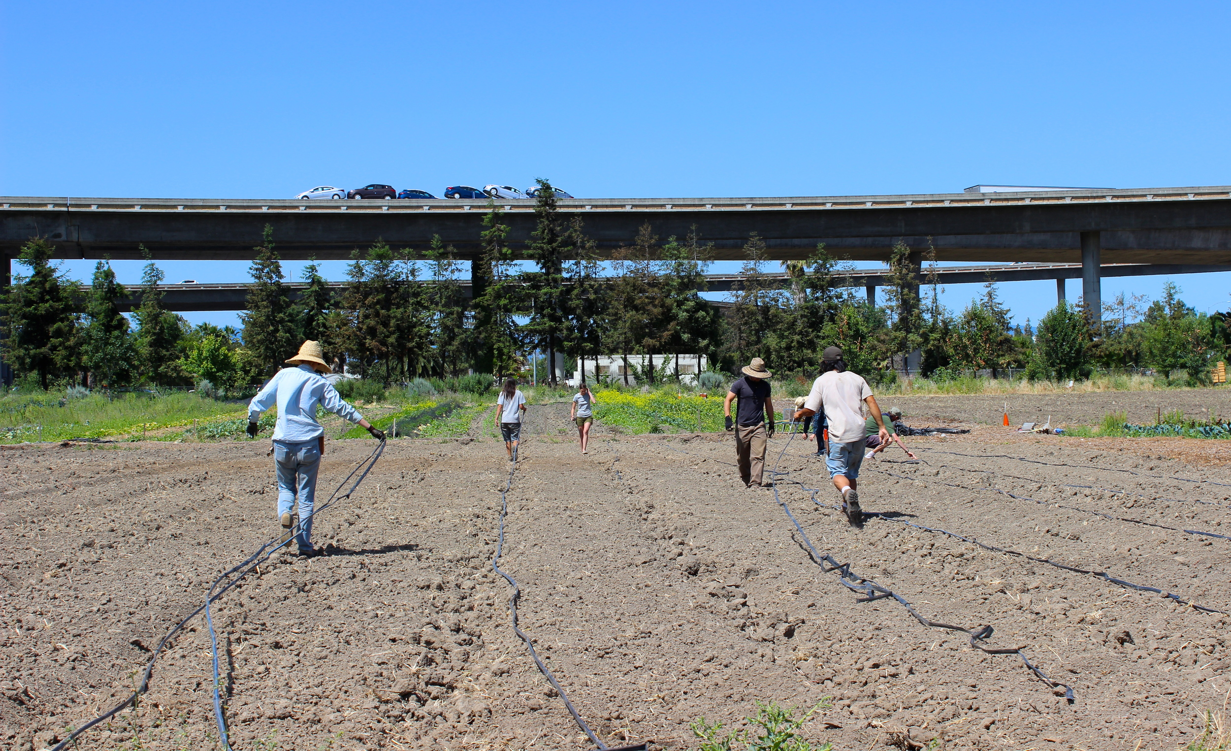 The team lays out a new set of irrigation lines.