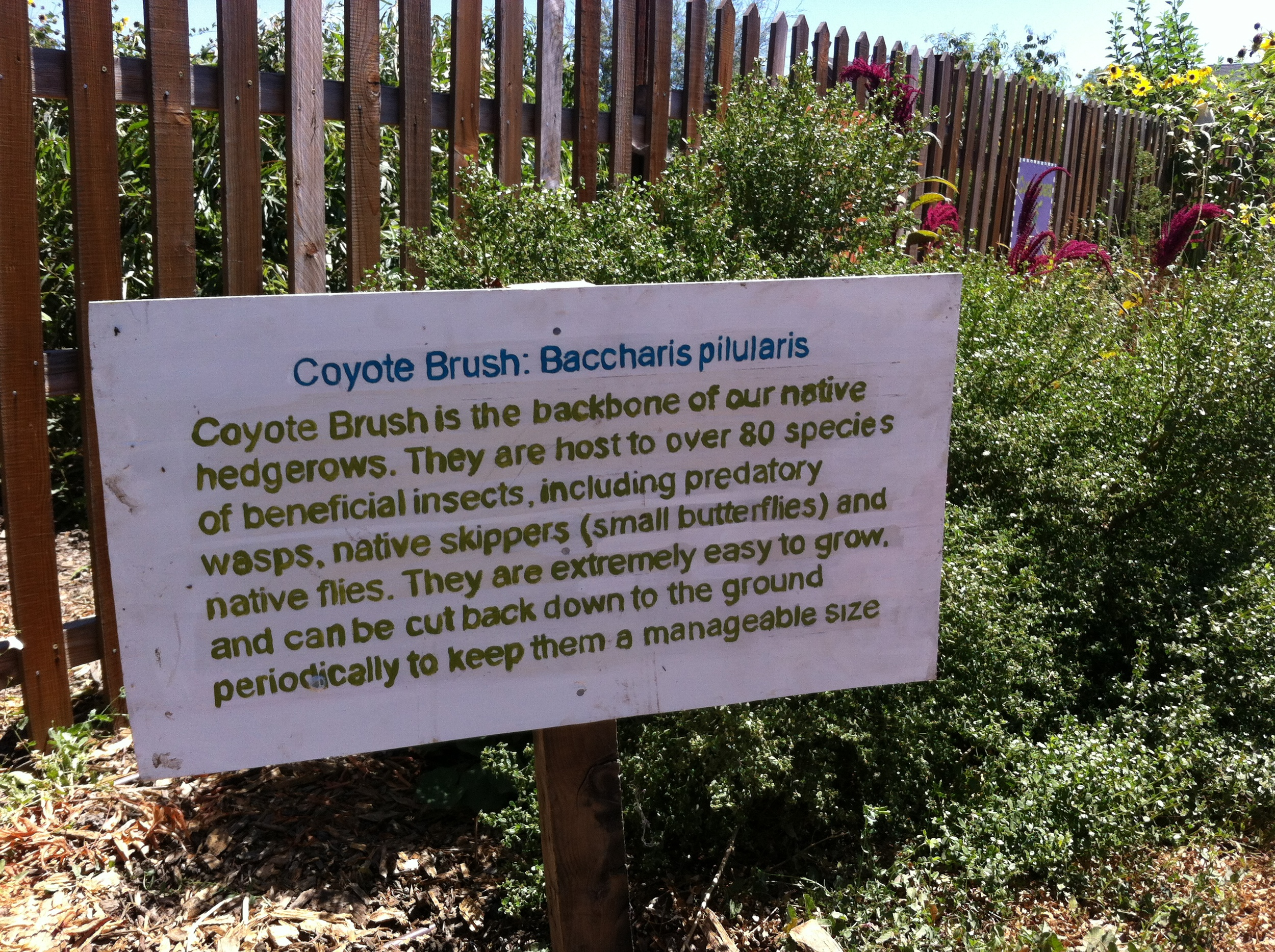 Informational signs give visitors give visitors useful info about how different native plants contribute to the farm.