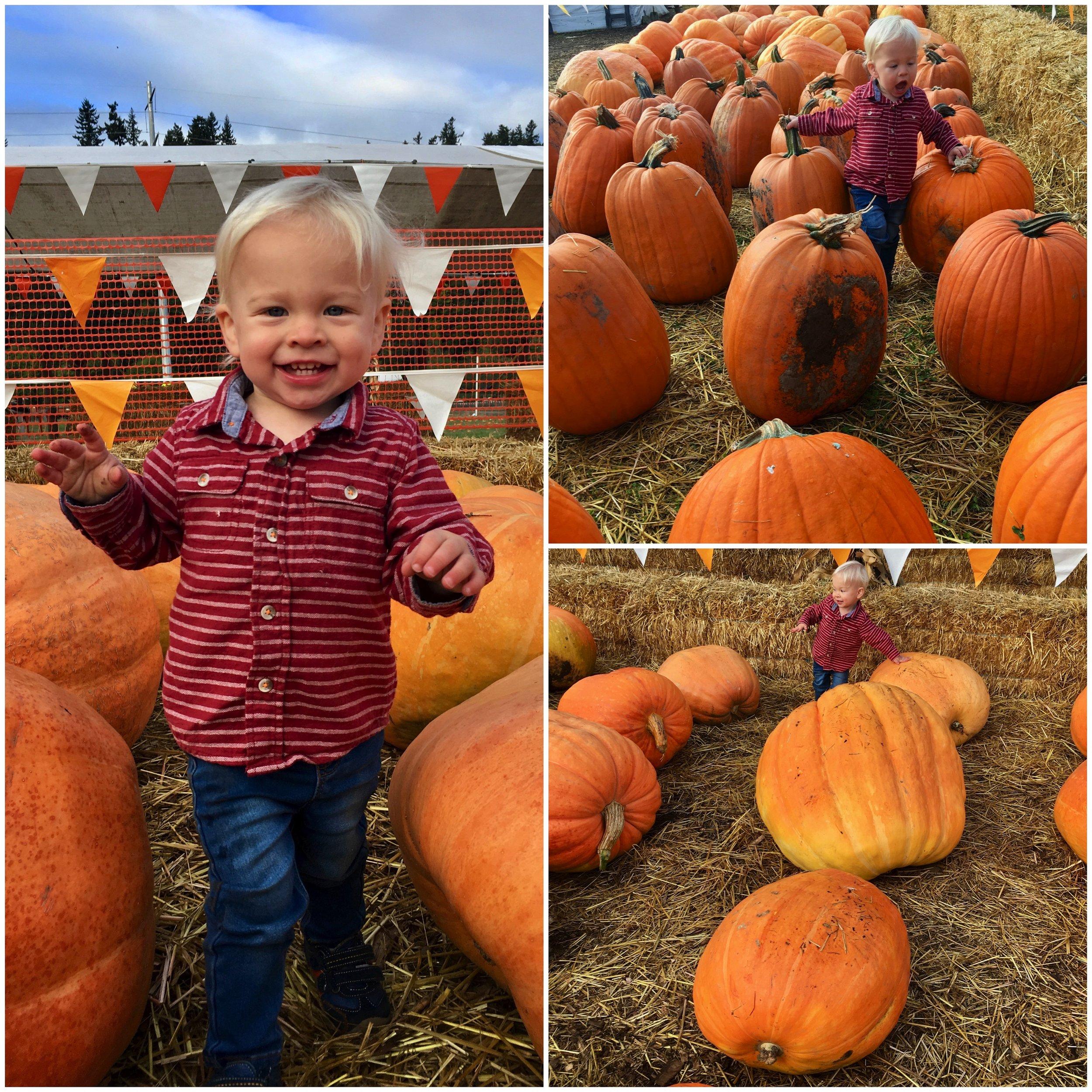 spooners-cb-pumpkin.jpg