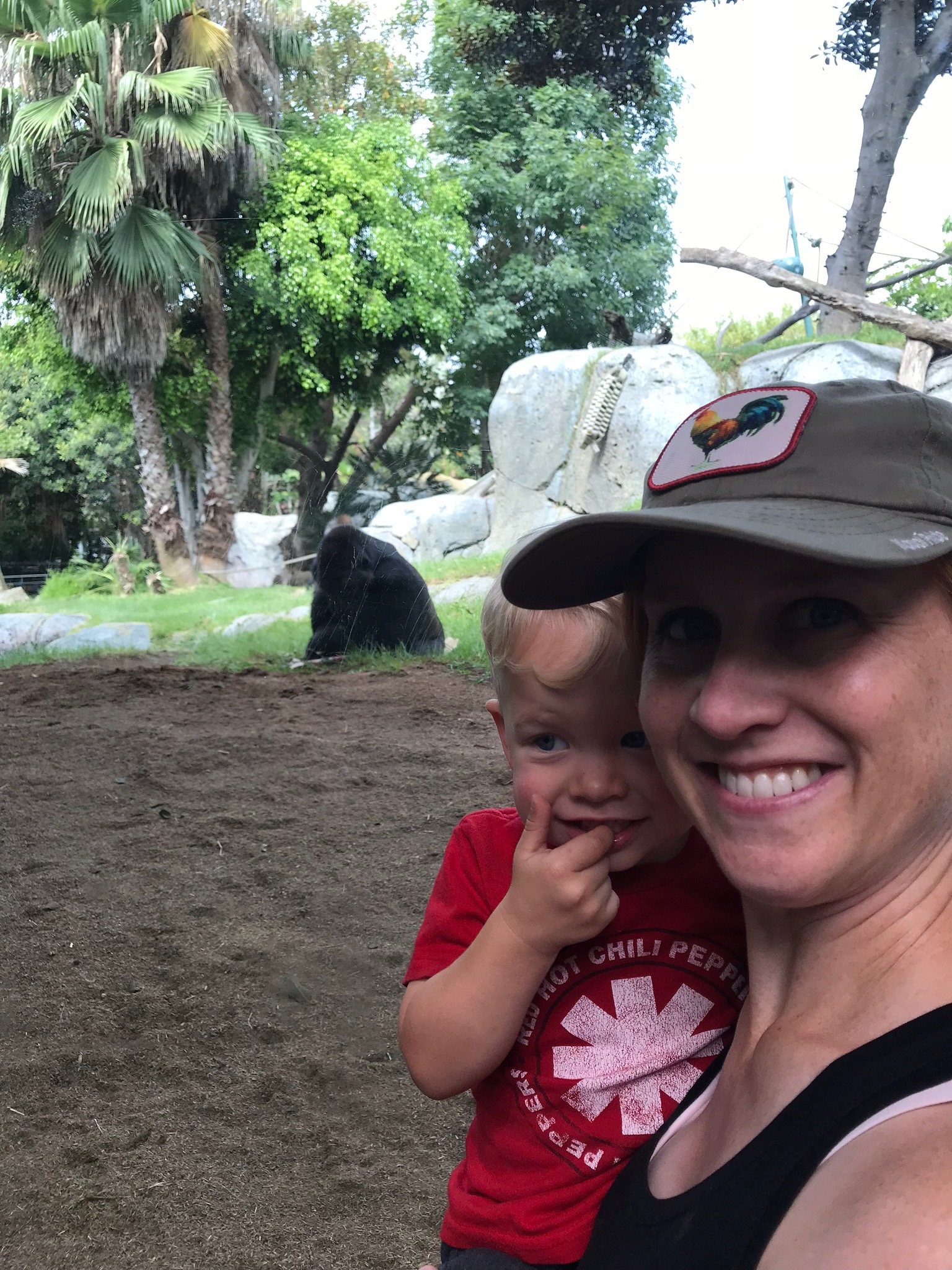 San Diego Zoo: Caleb is unsure about these Gorillas