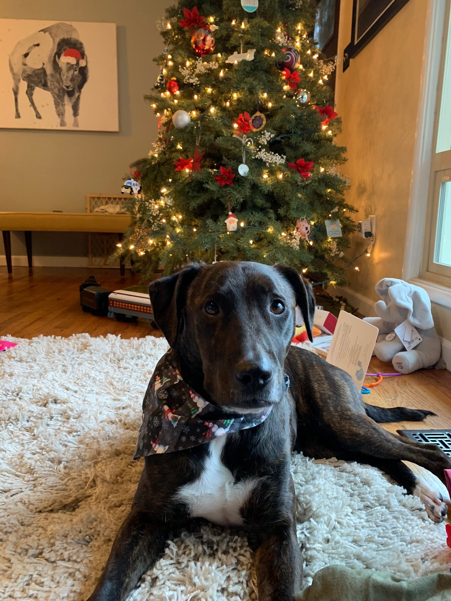 Asha, the Christmas Pup