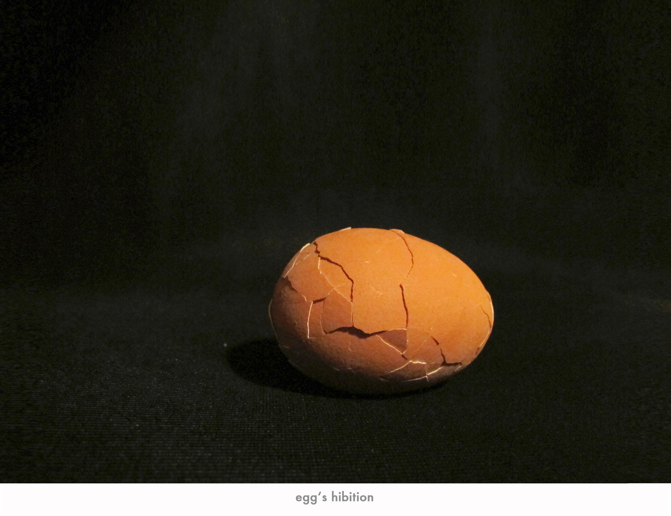 egg_life.jpg