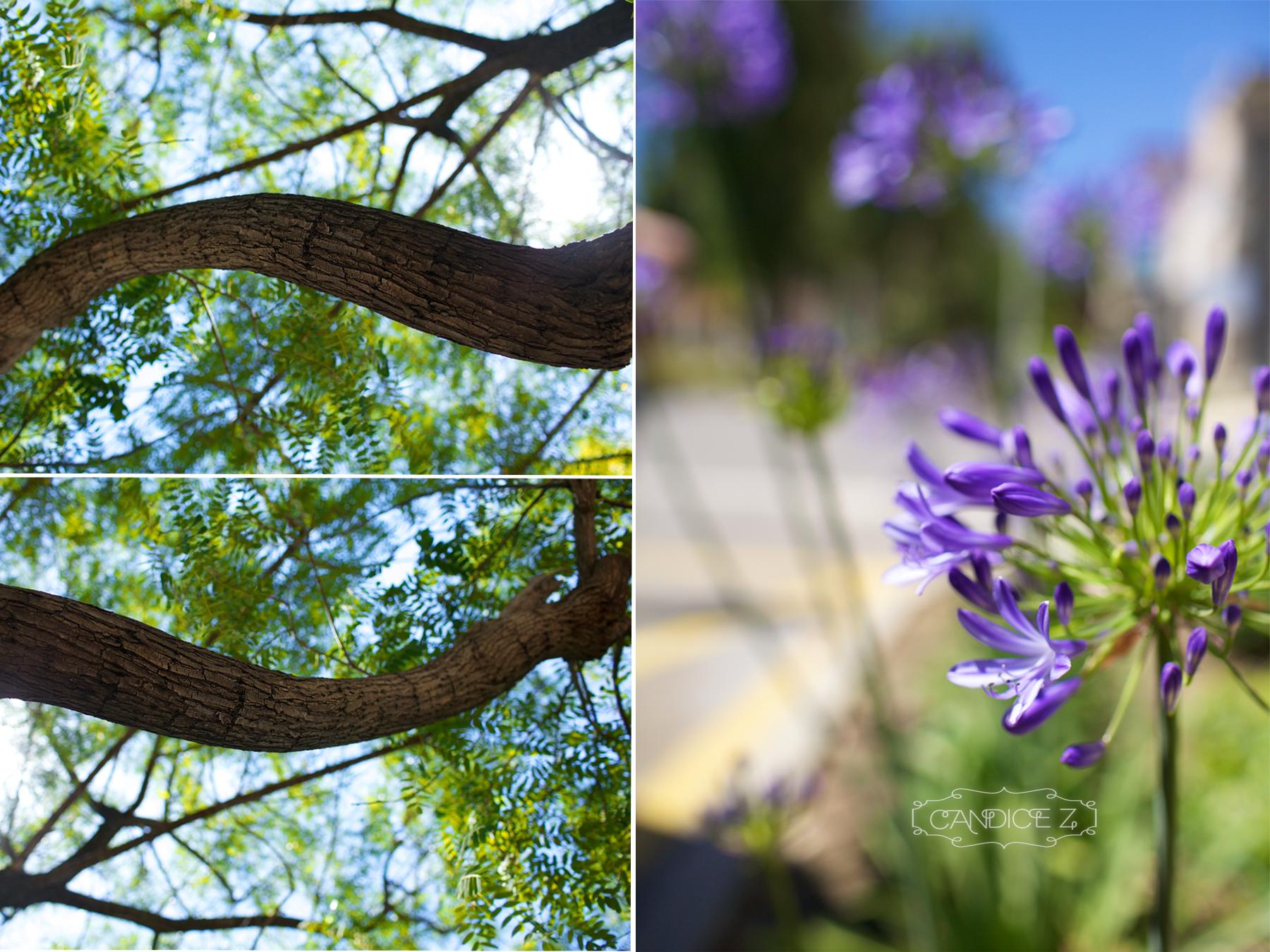 treeflower.jpg