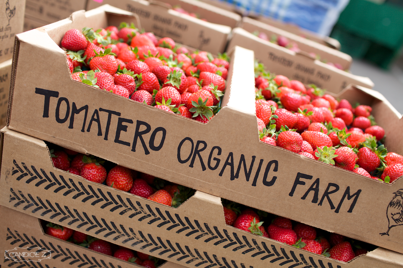 Tomatero Organic Farm.jpg