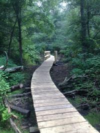 Boardwalk at Whipple Hill