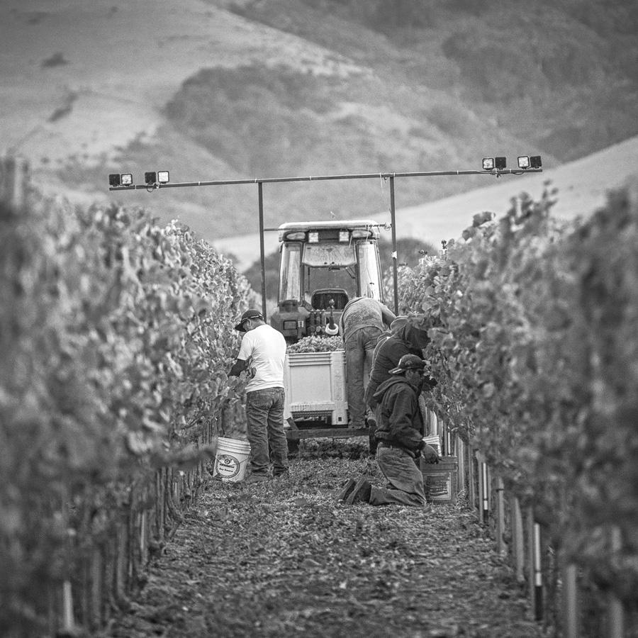 BC.Harvest.5.jpg