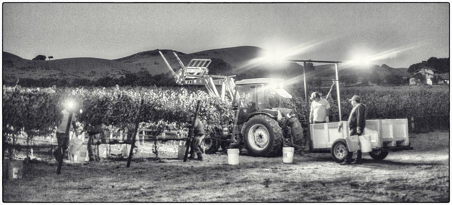 BC.Harvest.4.jpg