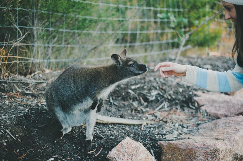 Tasmania 2013 -180.jpg
