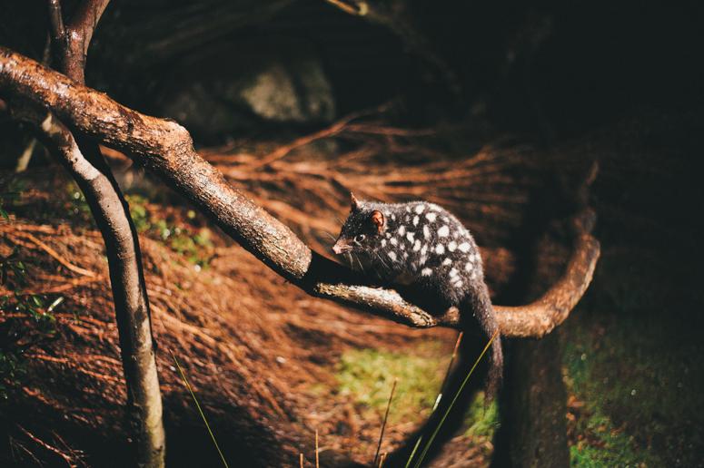 Tasmania 2013 -279.jpg