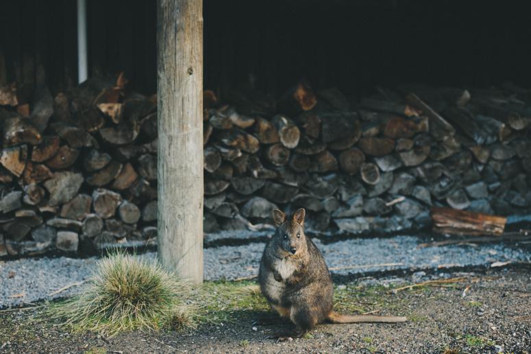 Tasmania 2013 -206.jpg