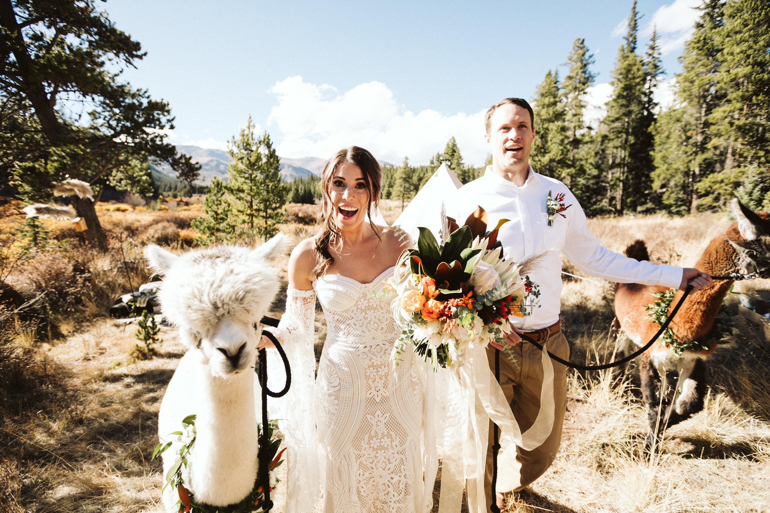 stephanie-wood-photography-colorado-cabin-alpaca-shoot-8662.jpg