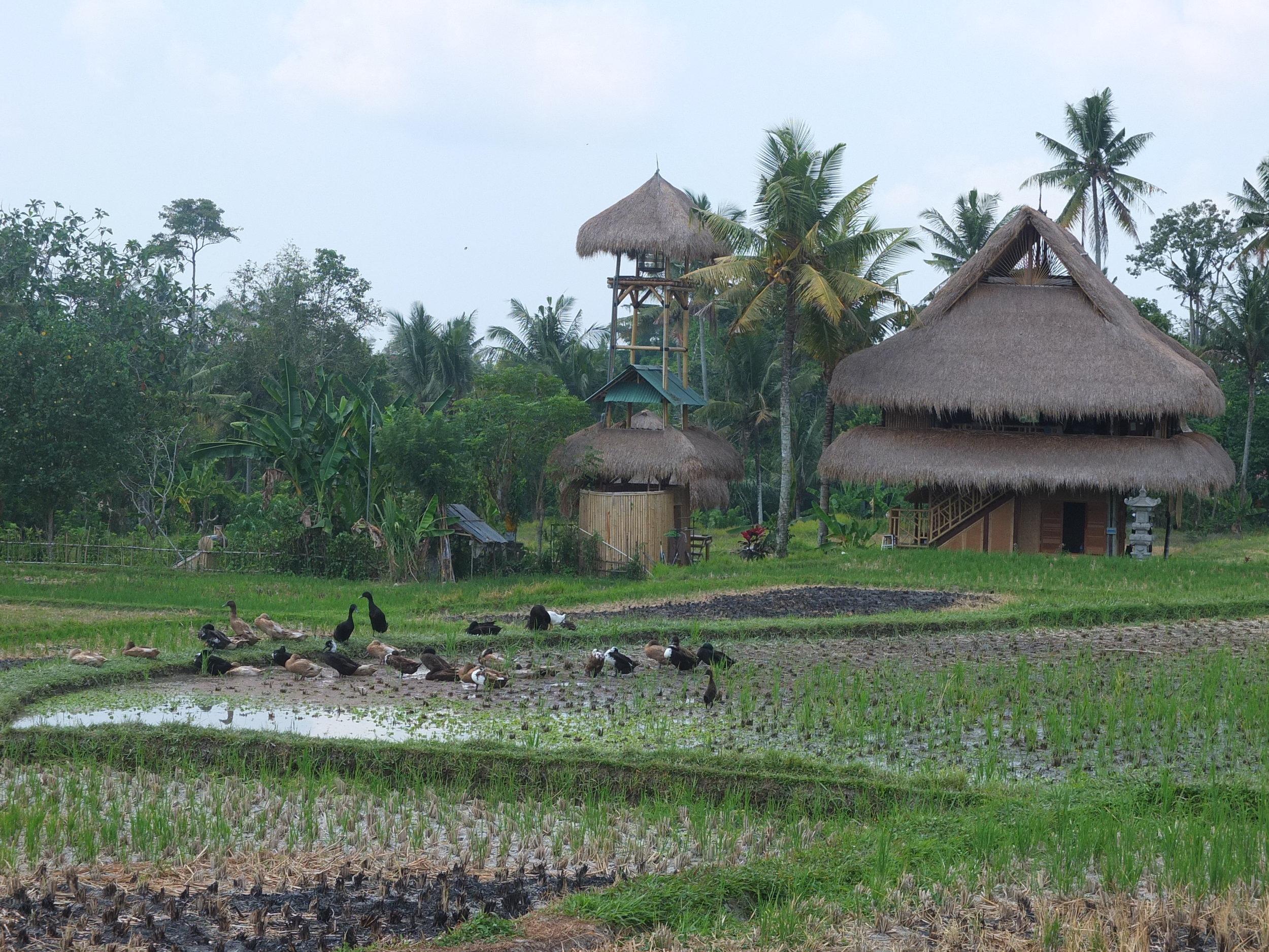 Traditsiooniline Bali elamu keset riisipõldusid.JPG