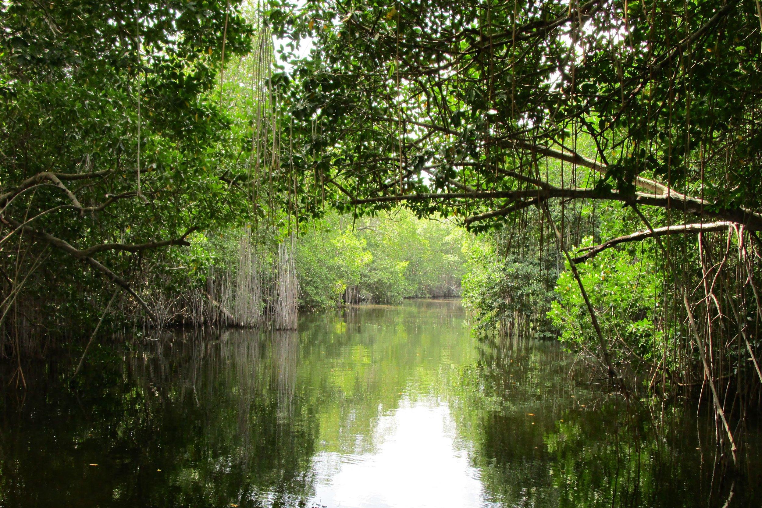 Black River, Jamaica. Foto: Tarrvi Laamann