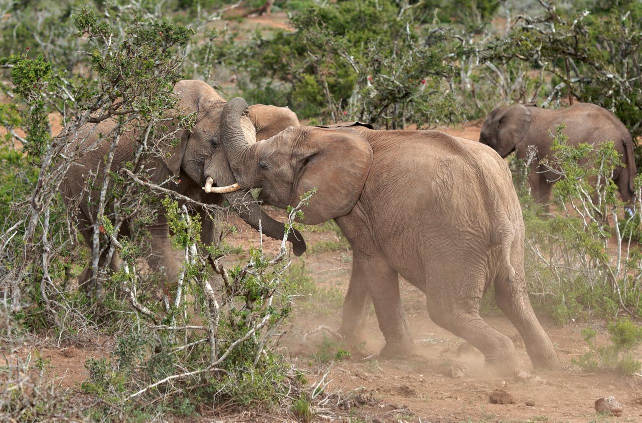 lõuna aafrika reis.jpg