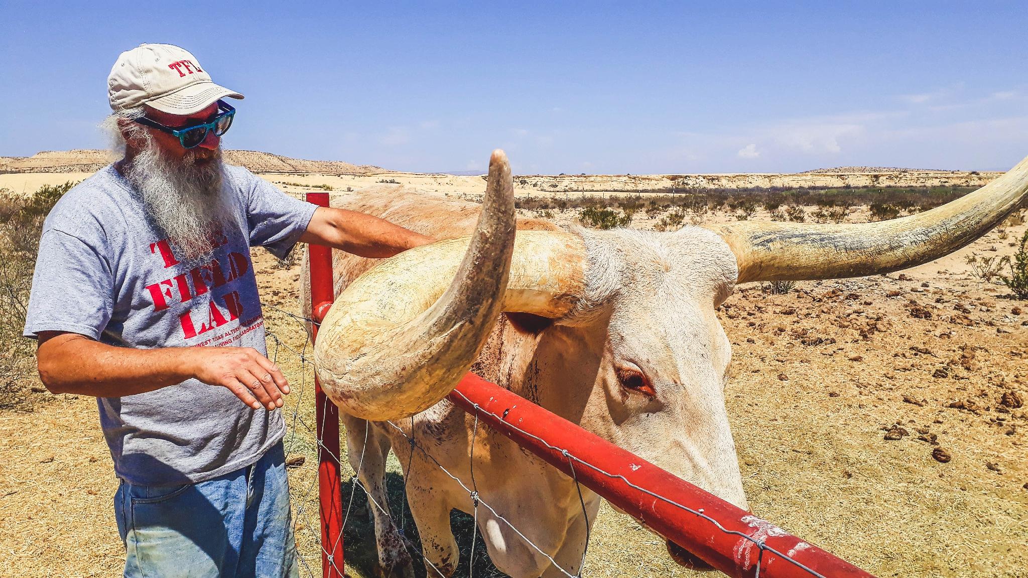 Üksik hunt kõrbes - John ja tema longhorn on tõeline Texase maasool, kes vaid harva külalisi vastu võtab. Foto: Väino Laisaar