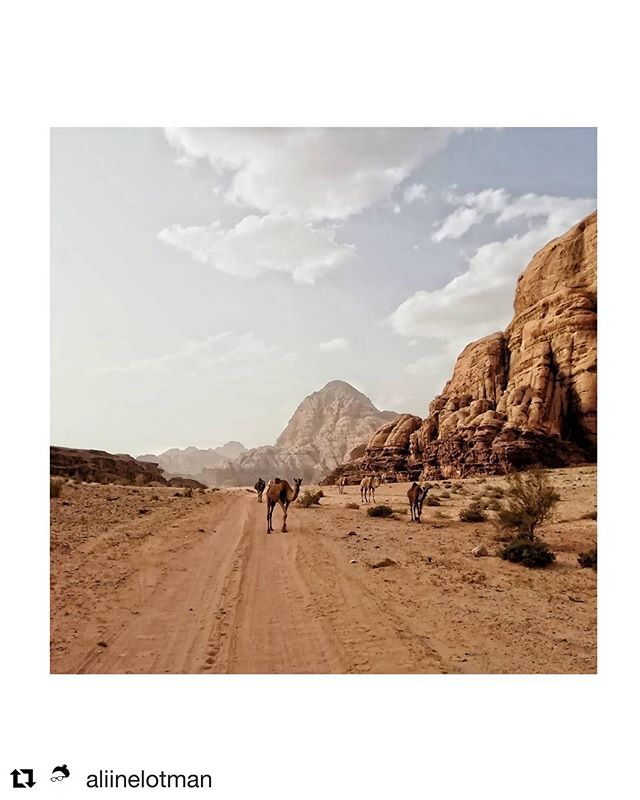 #Repost @aliinelotman , from Wadi Rum desert in Jordan ・・・ At 3 in the morning I wake up to a thudding sound that makes the earth vibrate. With sleepy eyes, I see a pack of camels galloping through our campsite. They are huge and fierce, running in the darkness, guarded only by a herd dog and followed by the flashlight of Sami the cook, frightened by the possibility of the beasts running into our tents. . The night, illuminated by countless stars, is cool and windy; the morning sun suffocatingly hot. . . . . #traveldeeper #exploremore #stayandwander #somewheremagazine #nowherediary #theoutbound #campeveryday  #letsgosomewhere #sensorialtravel #shareyourjordan #wadirum
