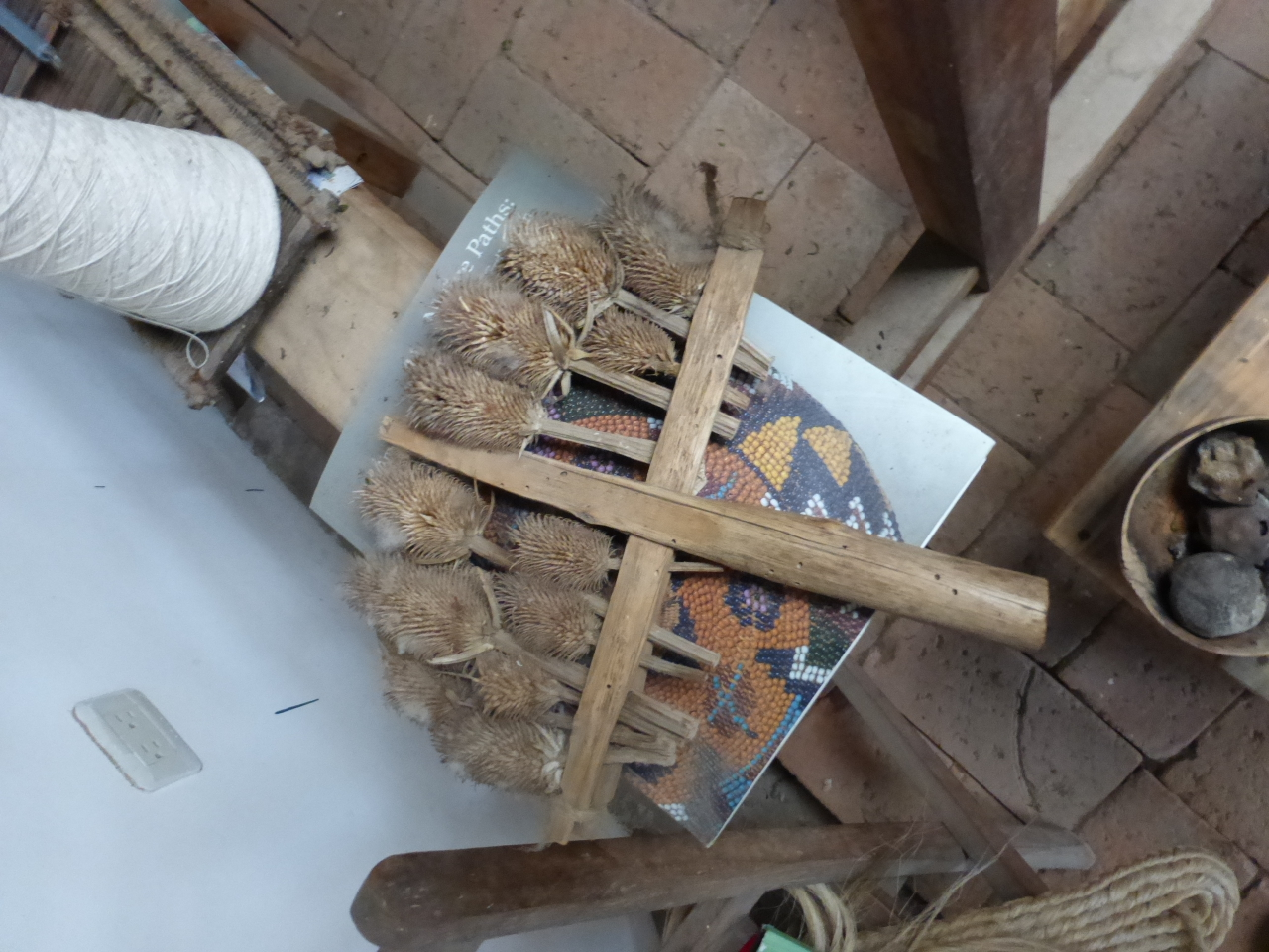 Thistle used for Carding the Wool
