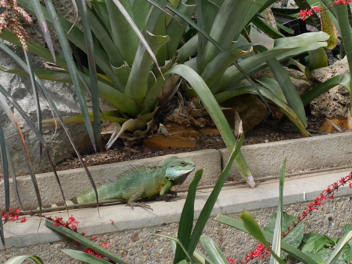 'It was nice seeing you but, iguana go now'  By Esme