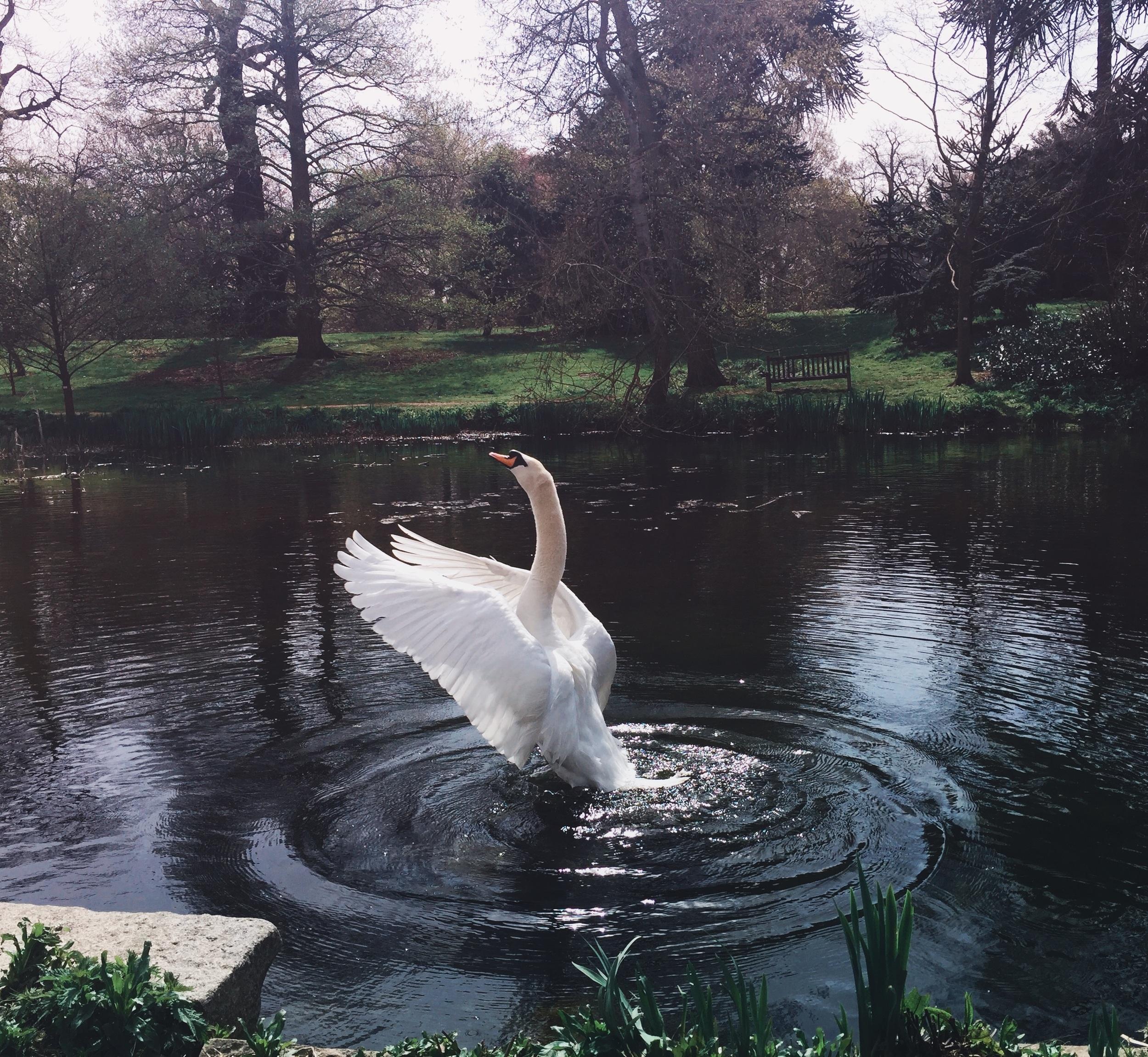 'A performance of Swan Lake'  By Tasmin