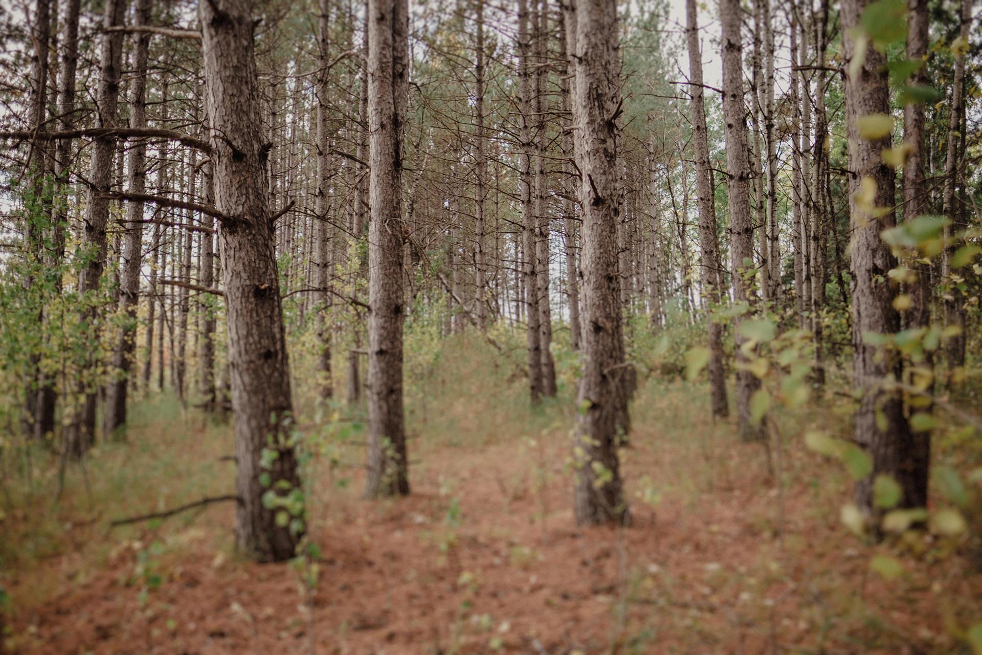 0001-manitoba-woodlands-engagement-photos.jpg