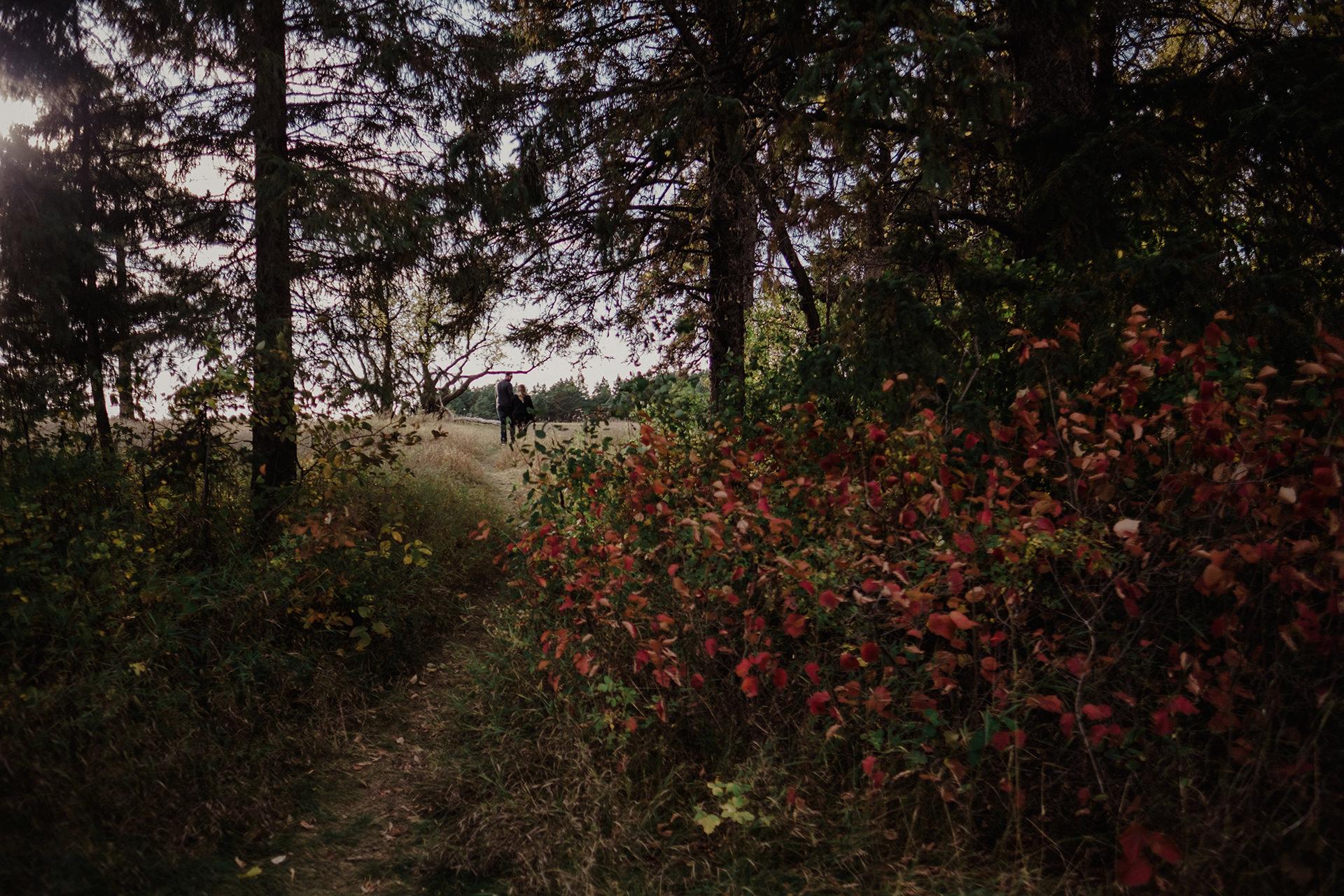 0010-manitoba-woodlands-engagement-photos.jpg