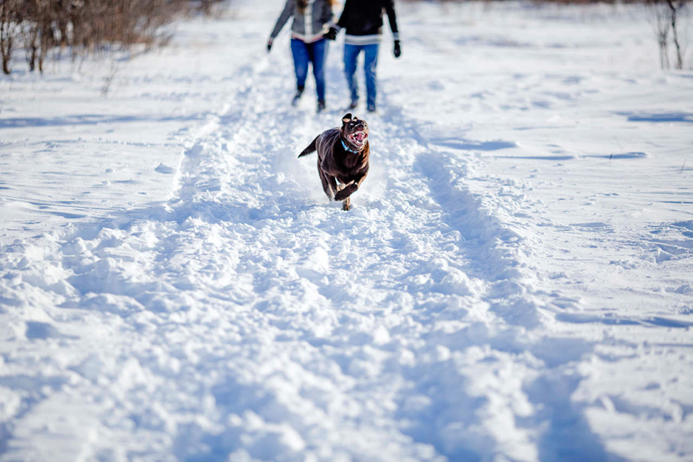 0003morris-winter-engagement-photos.jpg
