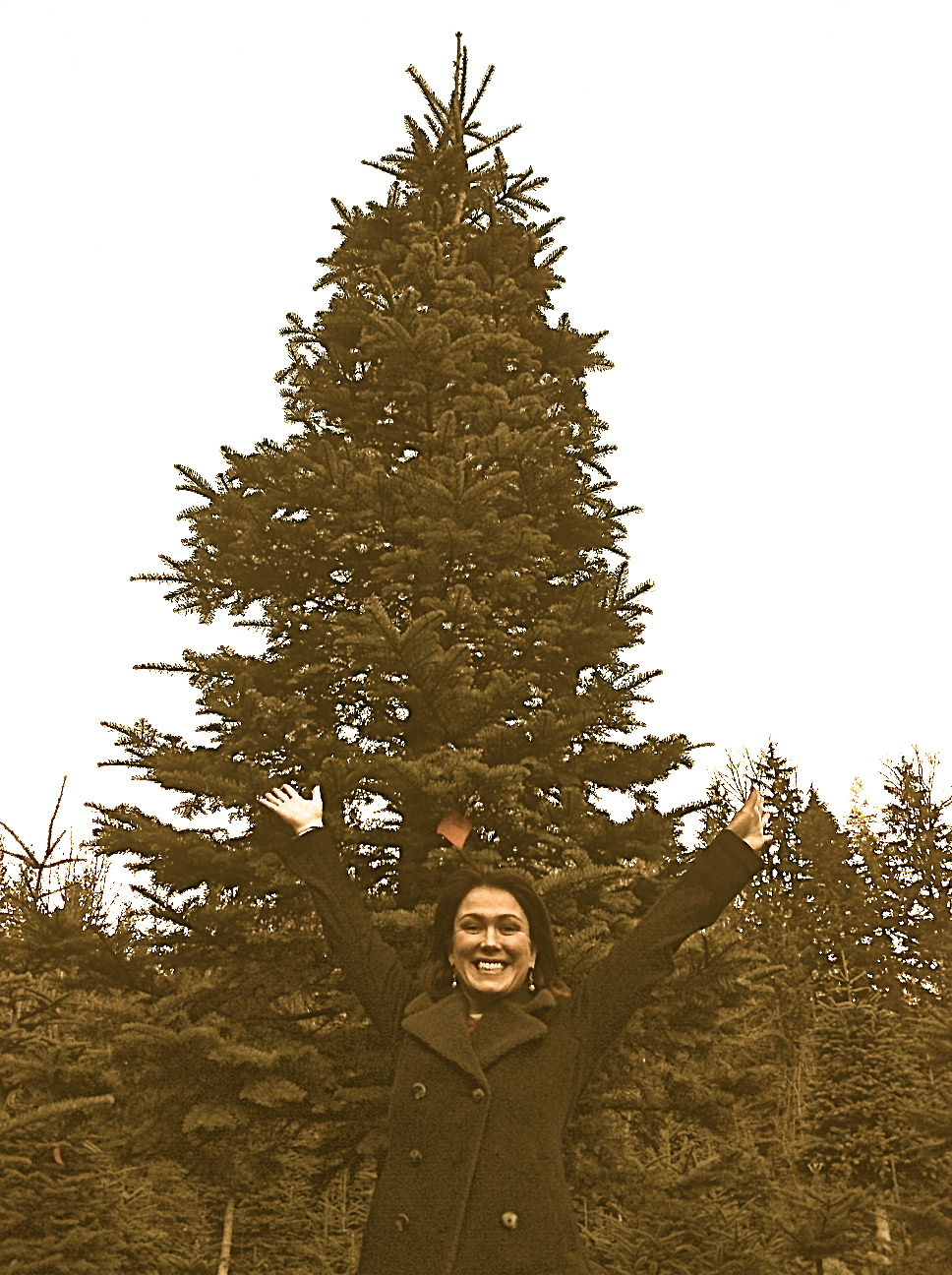 1st Pacific Northwest Christmas Tree, Dec 2011