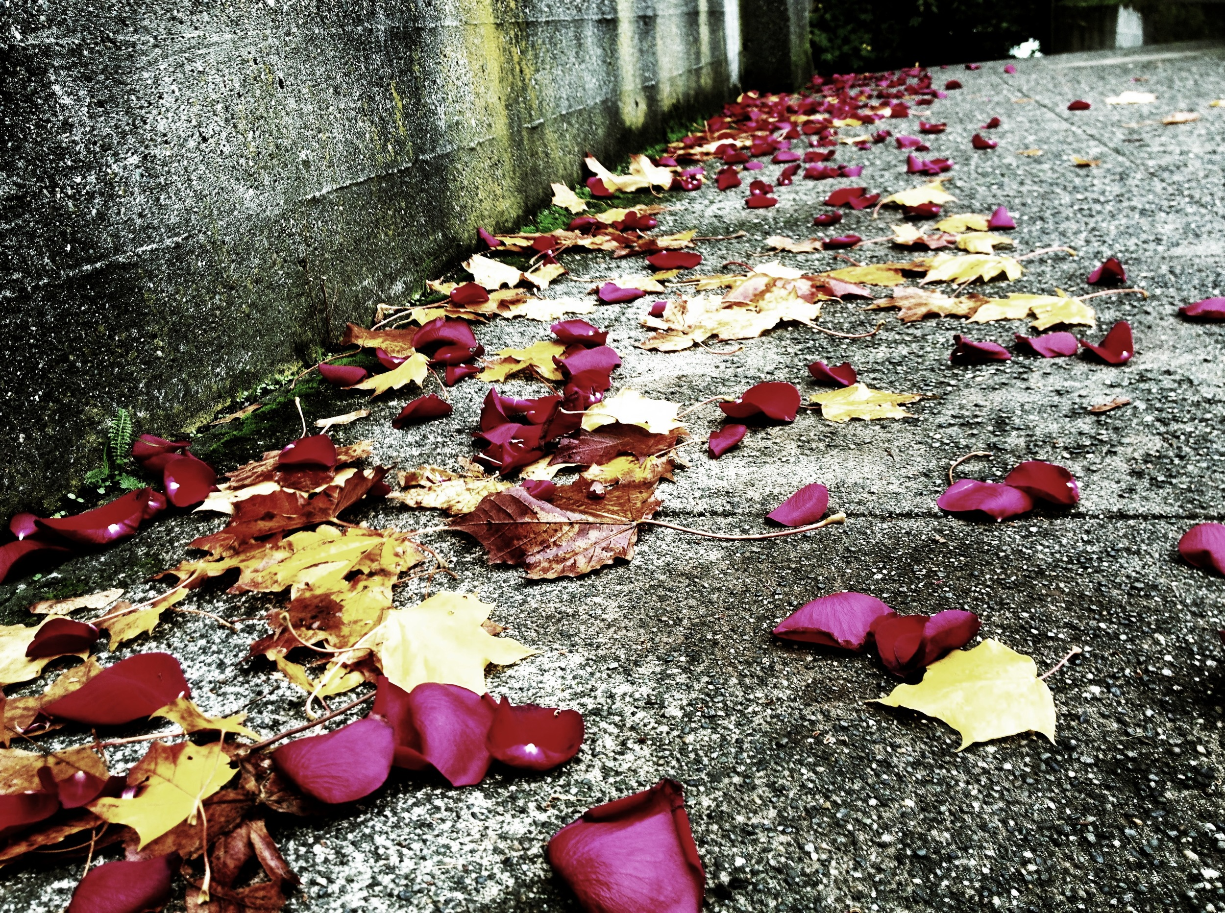 images : Chloë Rain