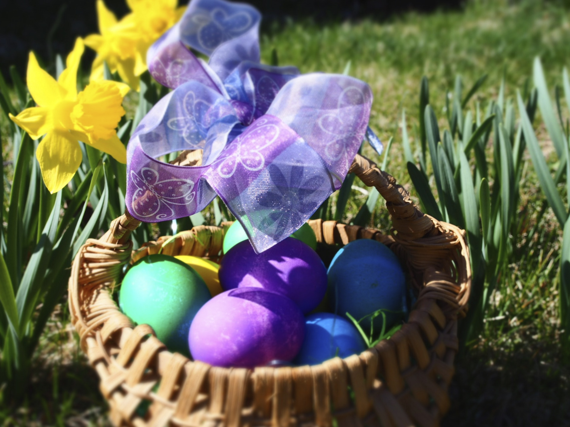 Pictures of our Easter eggs and my Easter basket in the front yard with the spring daffodils.  ChloëRain©  2015
