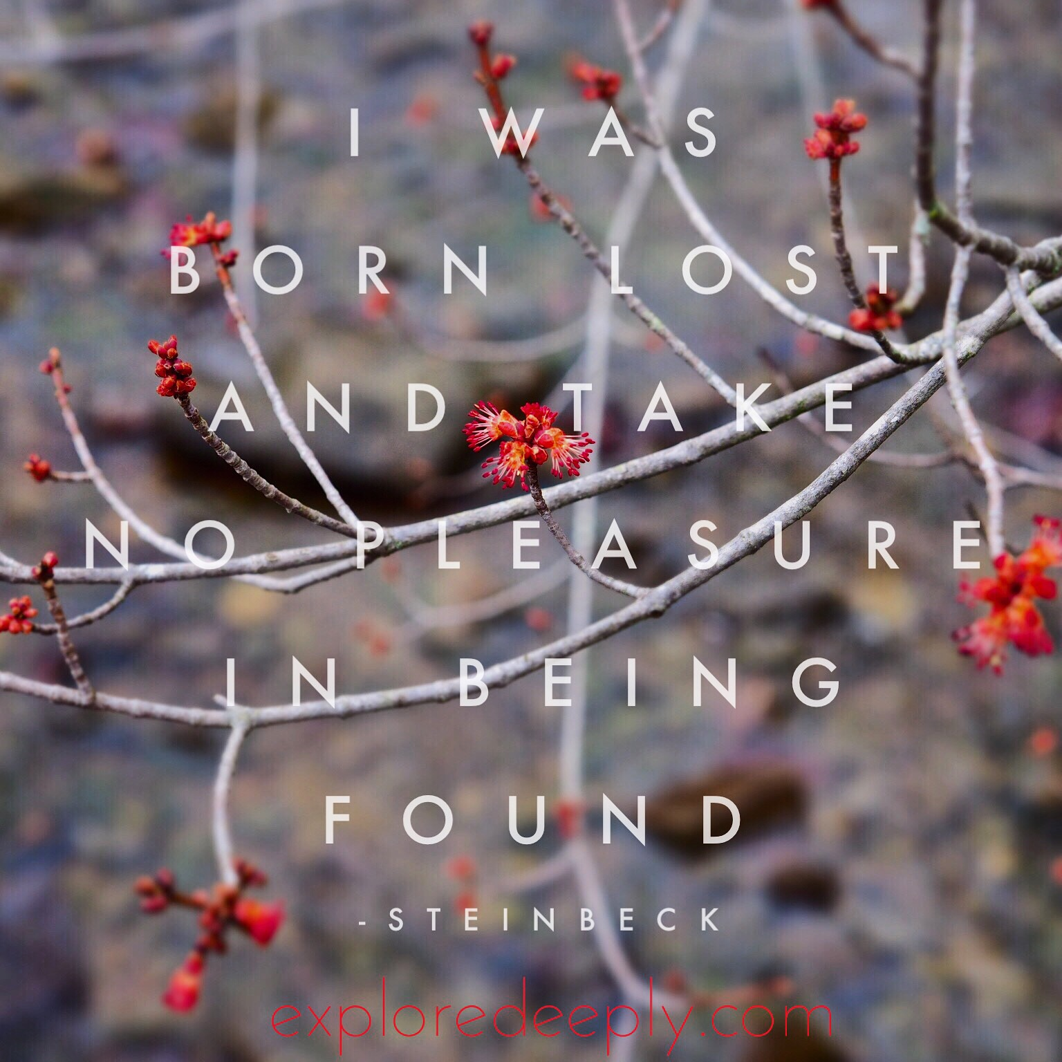 i was born lost and i take no pleasure in being found steinbeck quotes