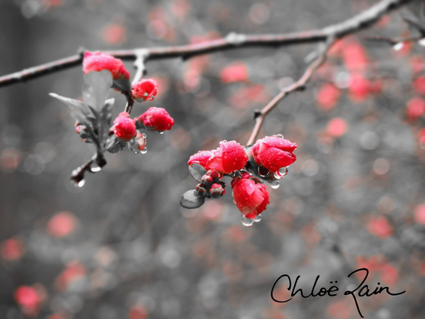 explore deeply quotes on learning to receive blossom photography