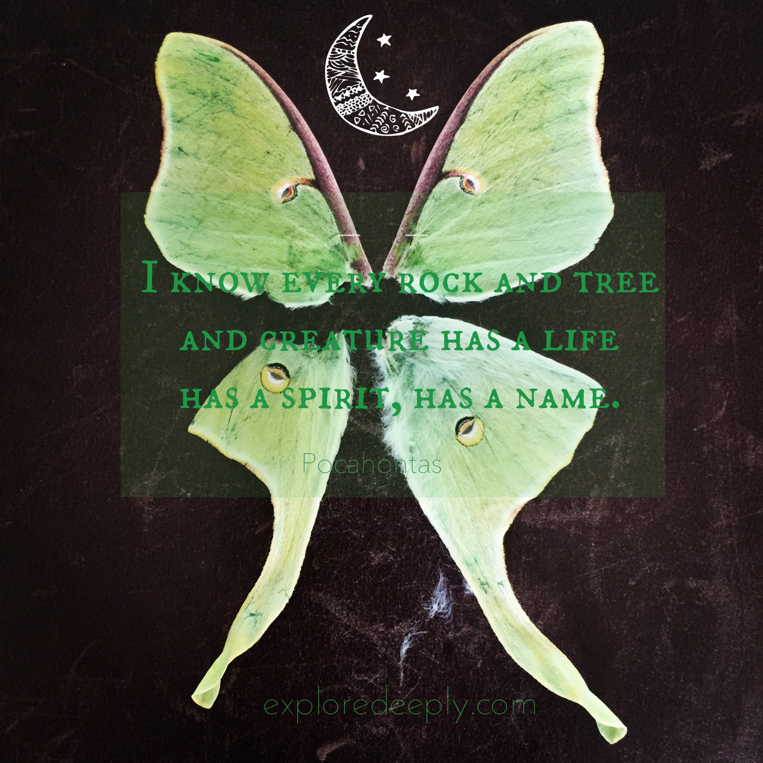 Finding a Luna Moth on my daily walk serves as a good omen for the following months, signifying the advent of change.