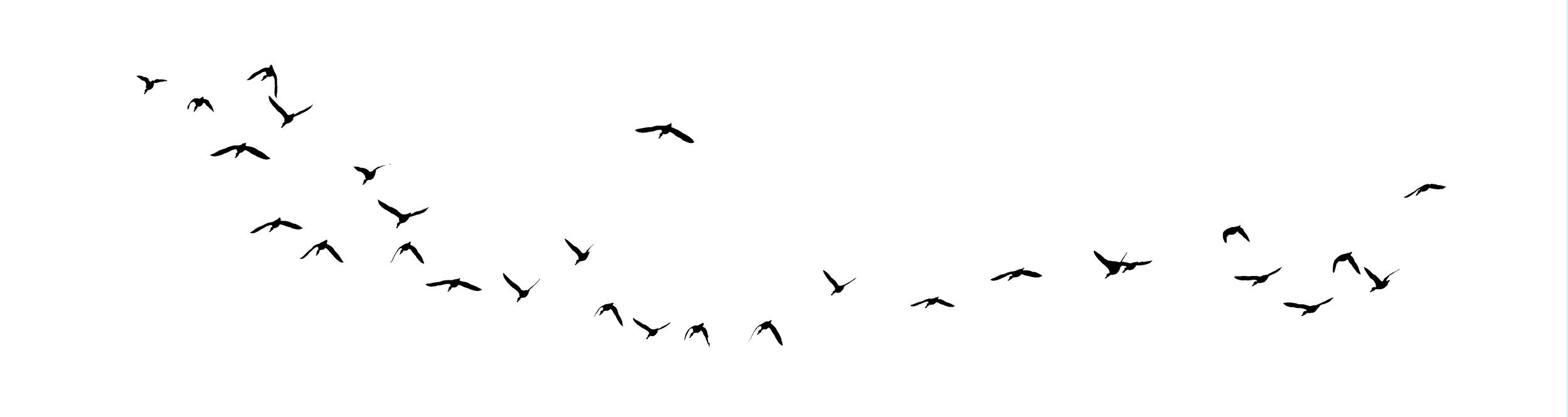 Bird in a White Sky.jpg