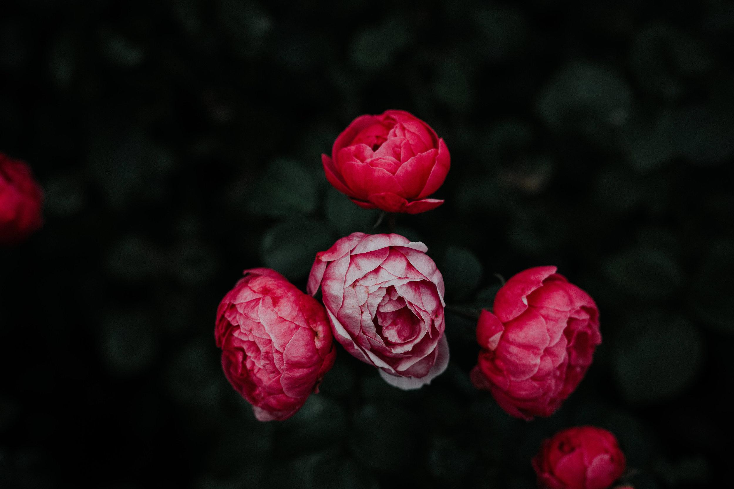 Florencia Viadana Broken Flowers.jpg
