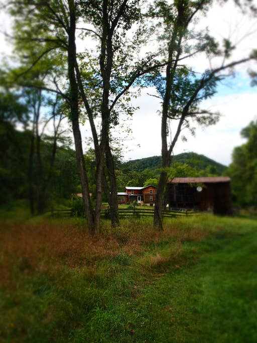View from of the cabin from the field looking toward the mountains and the national forest.