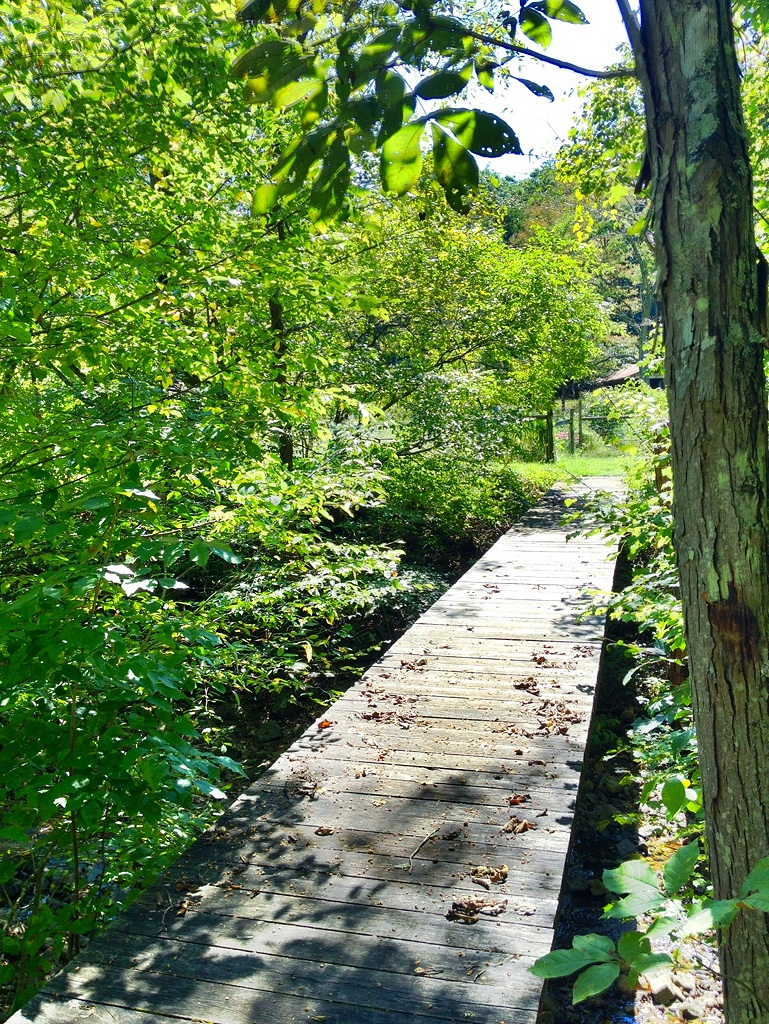 The foot bridge over the creek to the cabin in Springtime. You must access the cabin via the foot bridge, as you cannot cross the stream in a vehicle and drive up to the cabin.