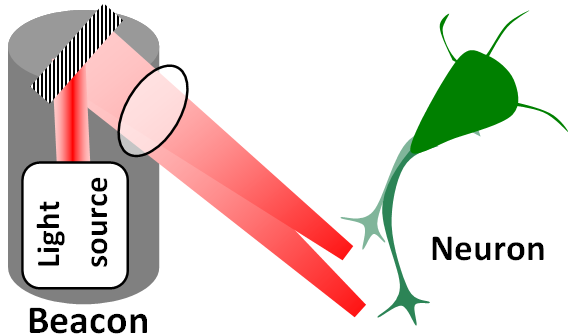 """Illustration of the """"neuronal beacon"""" for guiding axon growth direction (credit: B. Black et al./ Optics Letters )"""