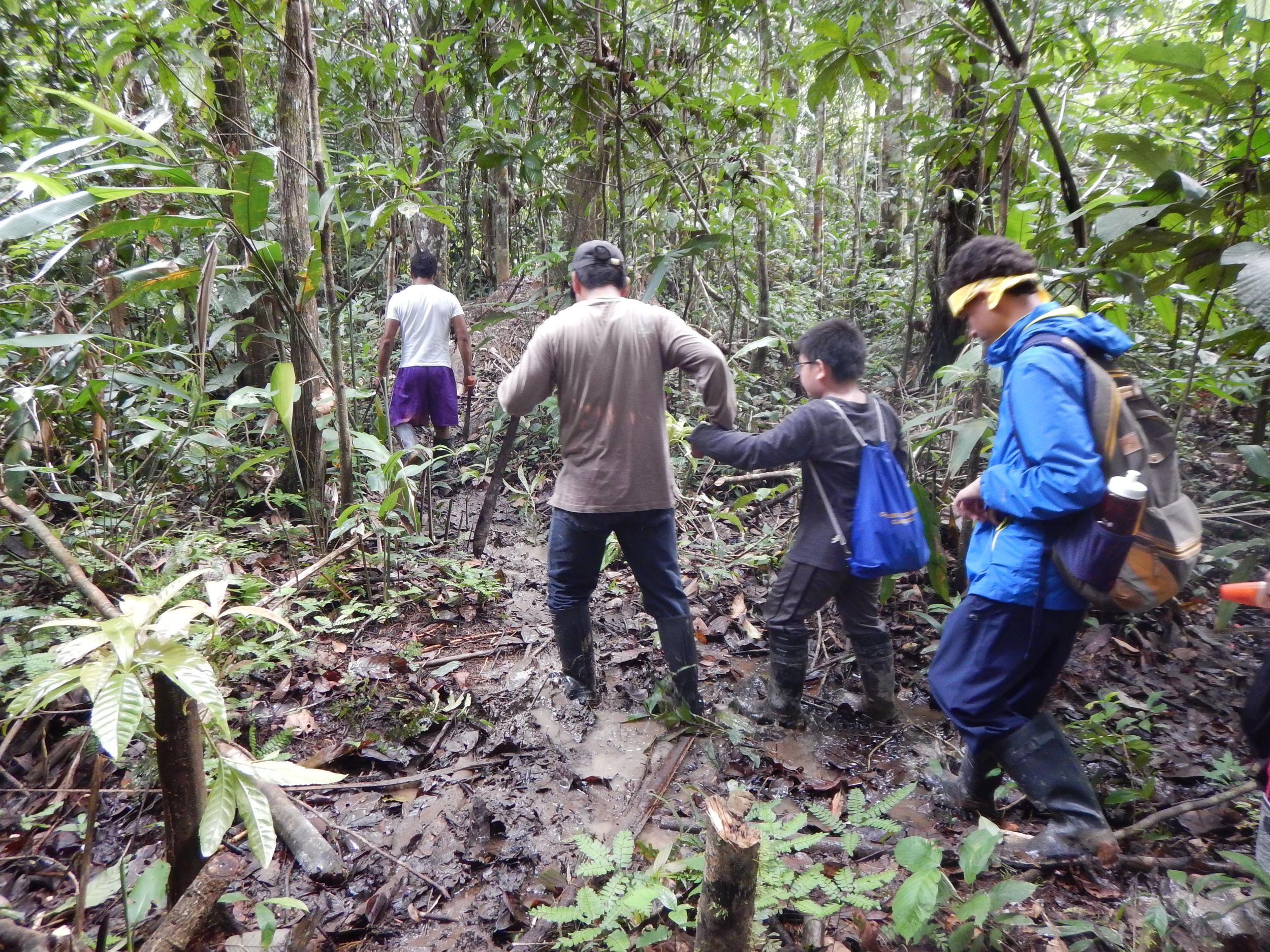 Hiking in the rainforest to explore plant and animal life