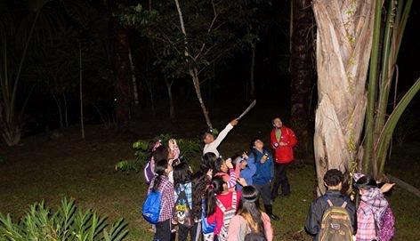 Nighttime Jungle Hikes