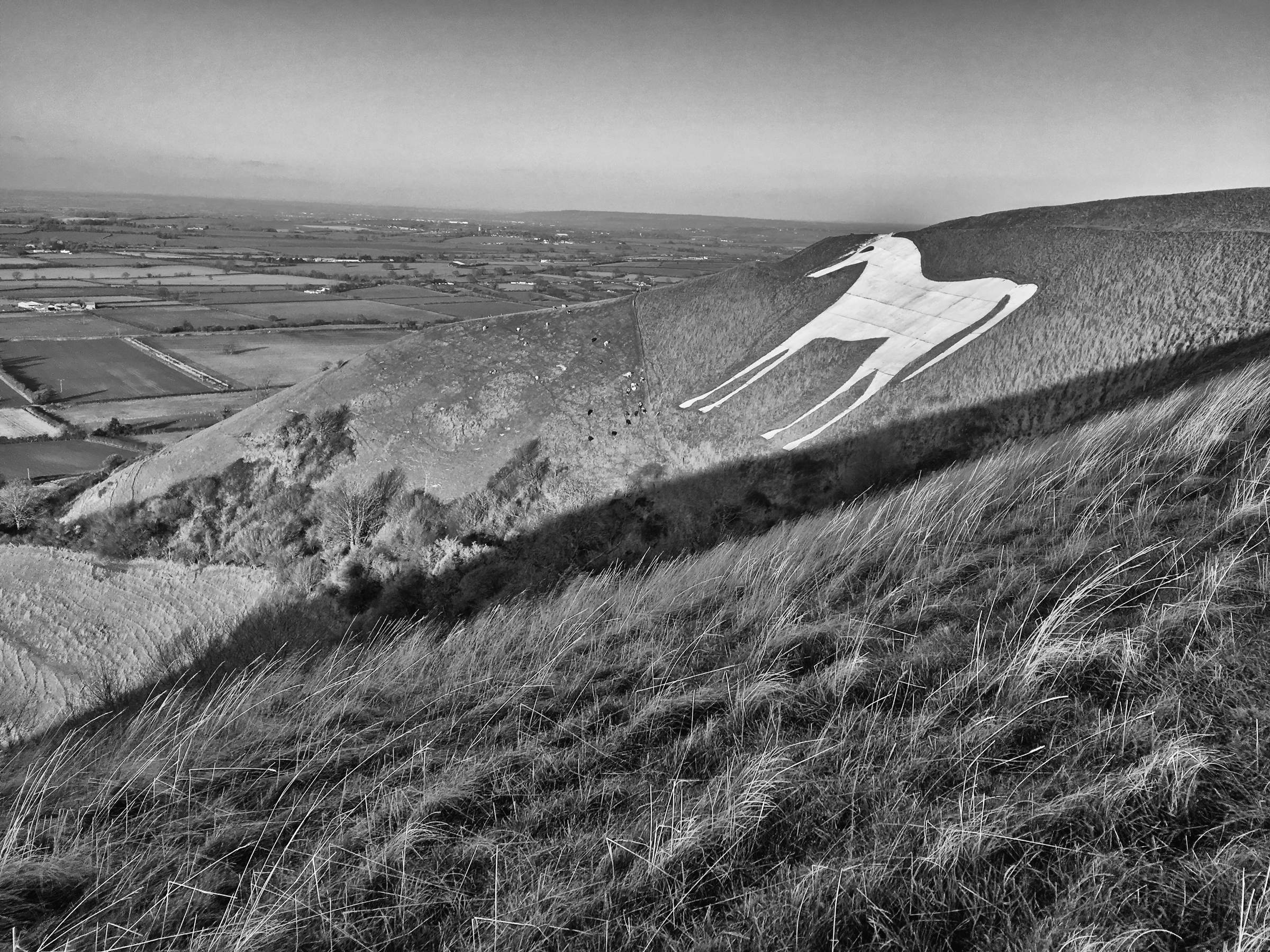 Long winter shadows fall over the Westbury White Horse in Wiltshire.