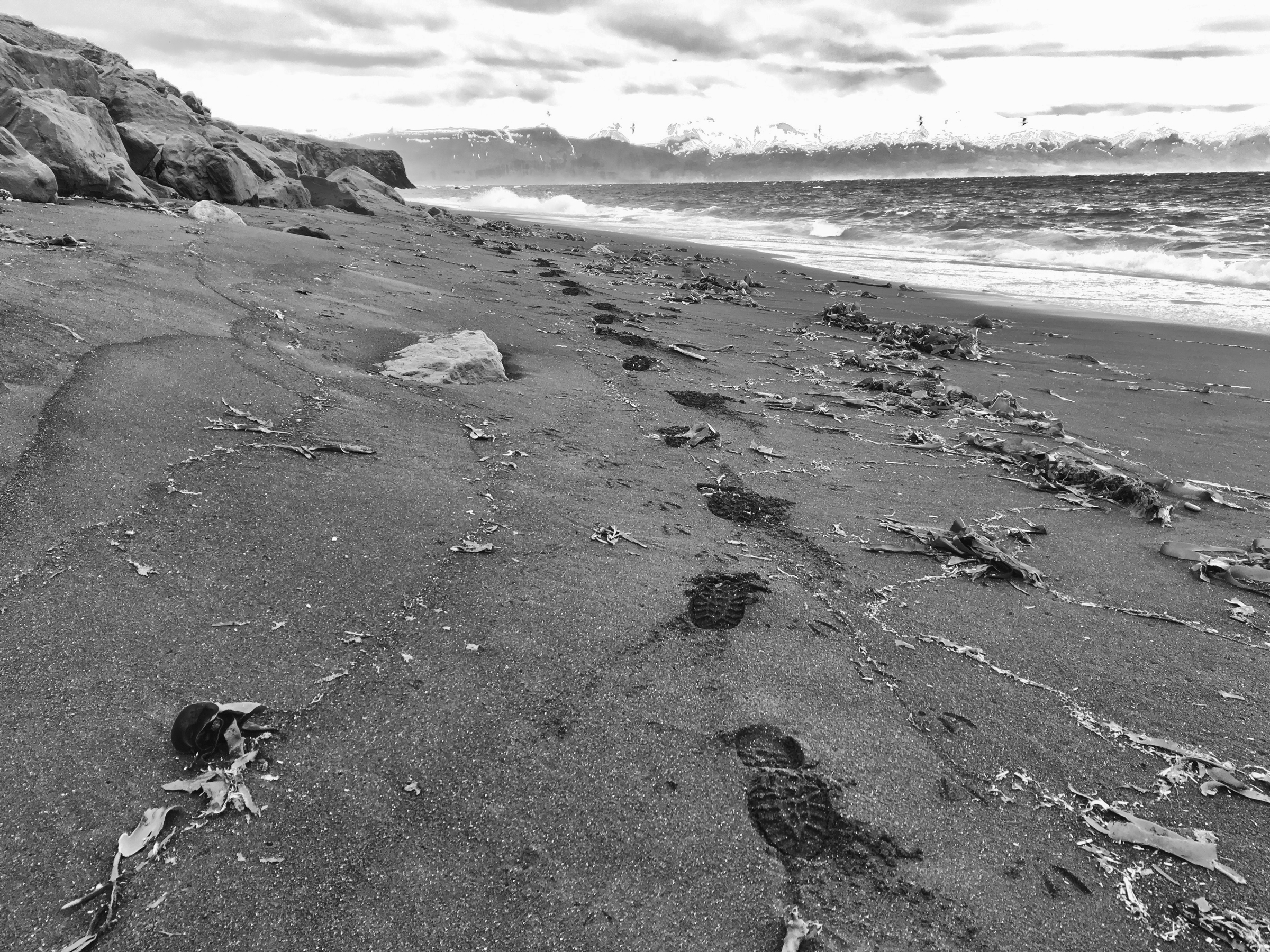 Footsteps on the beach at Húsavík, on the trail of the Red Phalarope.